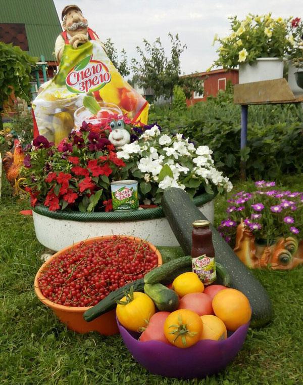 Спело-Зрело - продукты питания