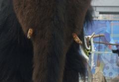 … И нечаянно натолкнулись на мамонта!