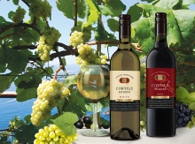 """CORTILE RITORTO"" - Italian collection in the best traditions of winemaking."