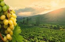 Вино с Защищенным Географическим Указанием от Холдинга «Даймонд»